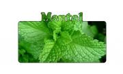 Menthol-tasting e-liquid
